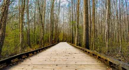 forest-park-walk-trail-21423.jpg